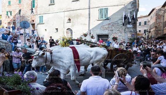 80 anni di Maggiolata: a Lucignano rivive la tradizione